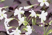 """PLANTAS """"O"""" / Catálogo de plantas"""