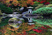 garden,nature