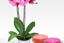 Idées Cadeaux - Fleurs et chocolats / Des idées de cadeaux à offrir à toutes occasions