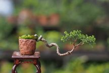 Jardines y decoración natural / Todo en plantas y decoración interior y exterior con naturaleza