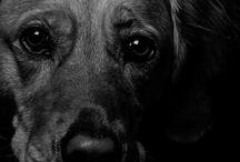 Fotos - Animals