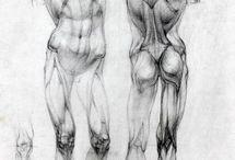Studies & Anatomy