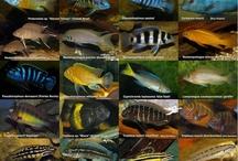 variedades de peces