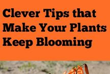 Tips for Plants to Bloom longer
