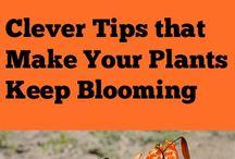 laat jou plante langer blom