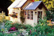 gardens / flowers / nature