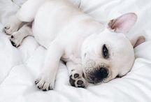 Cute dogs ♡
