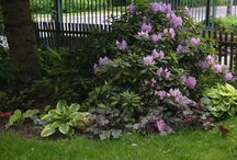 Rododendrony - Rhododendrons