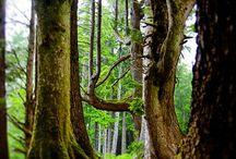 Nature's Beauty via Photography