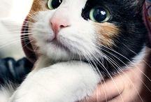 Kittyne