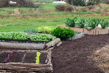 VEG Garden / by Julie Muhilly