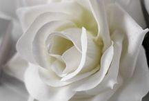 White...Pure....