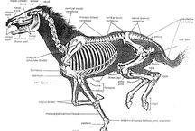 skelet div