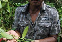 Fair Trade / Nipparel übernimmt Verantwortung. Die Bio-Kleidung trägt das GOTS-Zertifikat und steht somit für das Verbot von Kinder- und Zwangsarbeit, faire Löhne & sichere Arbeitsbedingungen. Auf dieser Pinnwand könnt Ihr alles rund um das Thema fair trade entdecken. WIr sammeln hier Artikel, Sprüche, fair produzierte Kleidungsstücke und zeigen Unternehmen, die sich auch auf organic fashion spezialisiert haben. #fair #bio #organic - und los geht's.