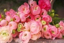 Pink Florals / by Whitney Press