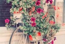 :belle fleurs / petals to inspire