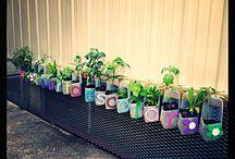 proyecto ecologico escuela