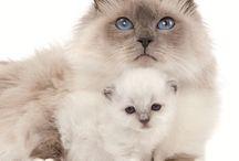 Amours de chats / En hommage à Leelee