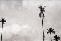 Trees / Trees that whisper poems