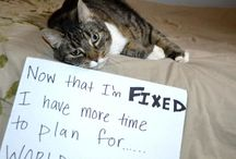 Now That I'm Fixed / What does YOUR #dog or #cat have more time for now that she is #fixed? #WhenToSpay
