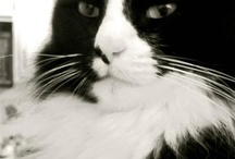 Henri le chat / The philosophising French cat of renown