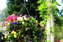 hanging baskets / by Toni Webb
