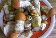 houby 2