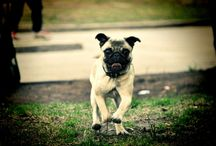 Imágenes de Mascotas Gratis