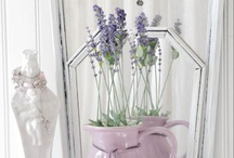 Color Violeta & Lila