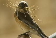 Incredible Nests / Examples of amazing nests! See all the diversity in nest type, habitat, and construction material.