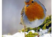 Bird watching / by D Ann Riddle