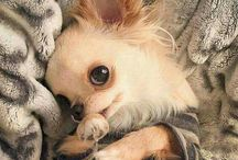 Animals ~ Too Cute!! / so cute