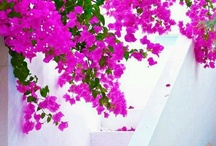Fushia & Pink & Purple