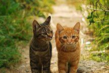 Dieren / Hier vind je lieve, schattige, stoere en mooie dieren!