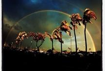 Great Landscape Shots / by Kenji Croman