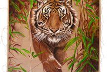CAT collection by BCP / Wild playfullness + sudden change of matter.