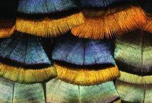 Effets de matières / Animal Végétal Terre Objets, bijoux ethniques