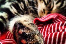 My Kitty Mela / by Kristen Erfle