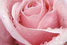 Love'n' pink