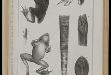 Лягушки