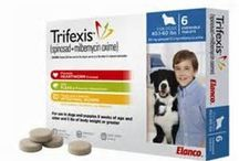 Parasite Preventatives / Help protect your fur-babies with one of our preferred flea, tick and heartworm preventatives!