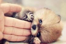 adorable(: / by Meagan Goudy