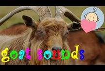 Animal sounds for children to learn