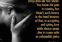 Dogs / Puppies, dogs, sayings about dogs and animals