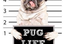 PUG LIFE CREO FASHION COLLECTION