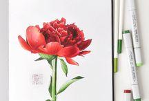 скетчинг цветы