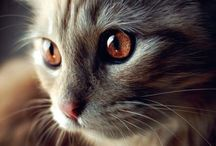 koty <3