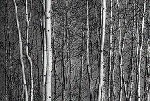 paisaje - árboles