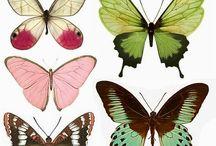 Laminas Insectos Vintage