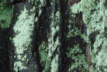 """""""Лица деревьев"""" / Каждое дерево имеет свой лик, свою неповторимую красоту"""